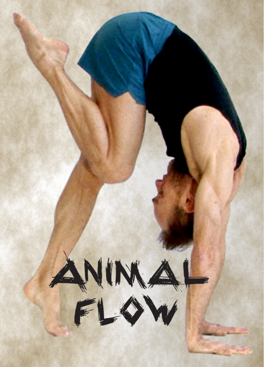 Flyer_Animal Flow_recto